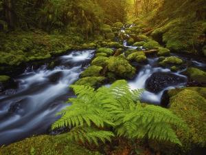 Gorton Creek Fern by Darren White Photography