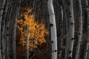 Light of the Forest by Darren White Photography