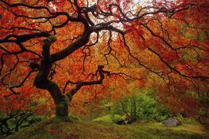 Tree Fire by Darren White Photography