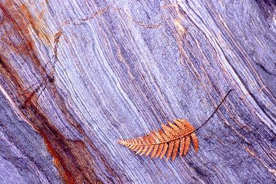 Abstract Macro of Schist with Veined Coloured Patterns and Brown Ponga Fern Leaf Juxtaposed