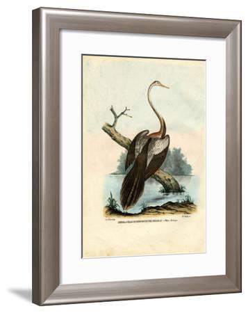 Darter, 1863-79-Raimundo Petraroja-Framed Giclee Print