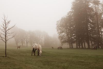 Dartmoor Ponies in Mist-Nichola Sarah-Photographic Print