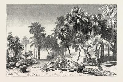 Date and Doom Palms. Egypt, 1879--Giclee Print