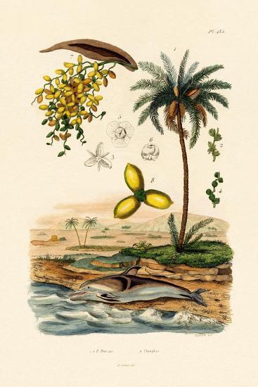 Date Palm, 1833-39--Giclee Print