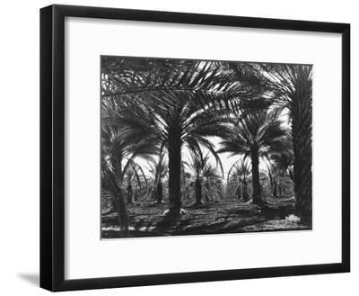 Date Palms Coachella Valley California Giclee Print Dorothea Lange Art Com