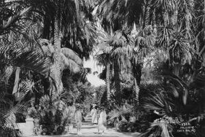 Date Palms, Palermo, Sicily, Italy, C1920S-C1930S