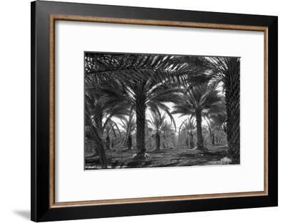 Date Palms-Dorothea Lange-Framed Art Print