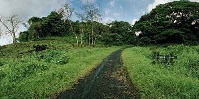 Dateline Drive on Taveuni Island-Macduff Everton-Photographic Print