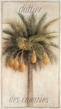 https://imgc.artprintimages.com/img/print/dattier-des-canaries_u-l-em7i30.jpg?p=0