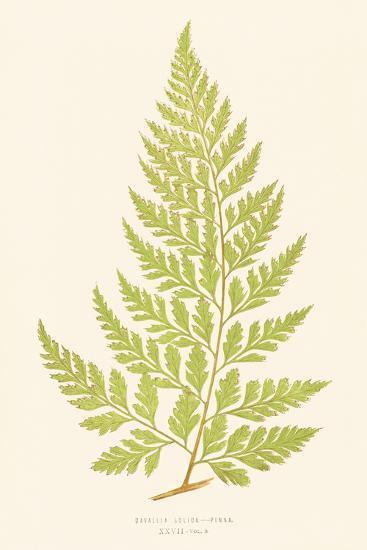 Davallia Solida-Edward Joseph Lowe-Giclee Print