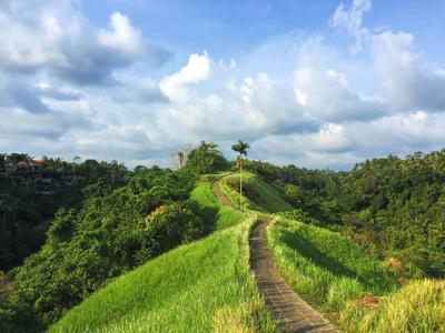 Idyllic Walking Path on Top of Green Hills. Tropical Nature Scene. Narrow Path in Rice Fields. Exot