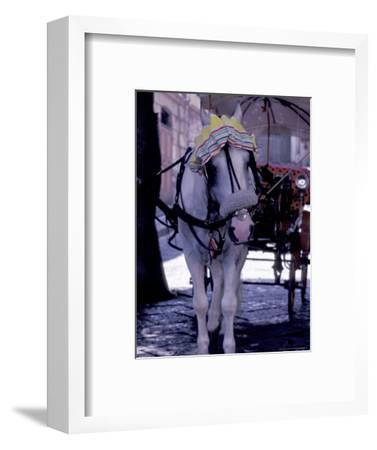 Horse Carriage, Sorrento, Italy
