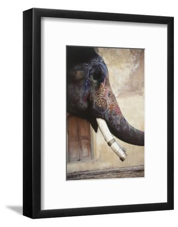 India, Rajasthan, Amber, Amer Fort, Painted Indian Elephant