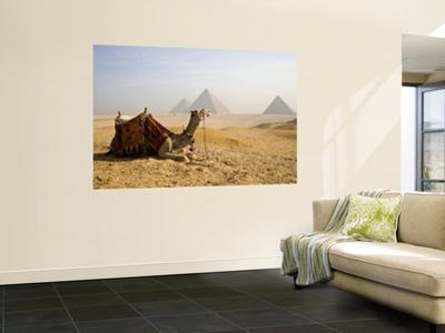 Lone Camel Gazes Across the Giza Plateau Outside Cairo, Egypt