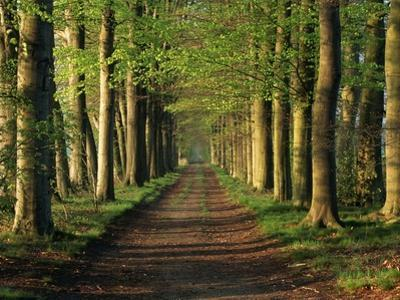 Tree-Lined Path by Dave Bartruff