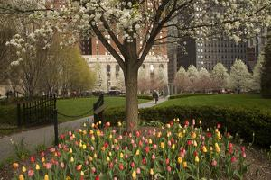 Trees and Tulips in Blloom in Mellon Green, Pittsburgh, Pa by Dave Bartruff