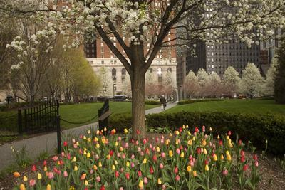 Trees and Tulips in Blloom in Mellon Green, Pittsburgh, Pa