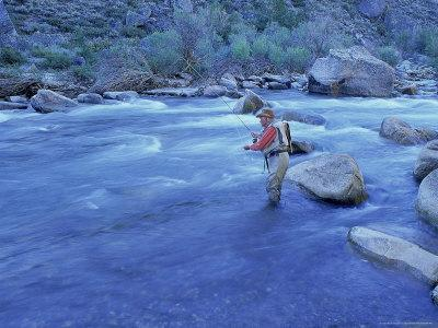 Mature Man Fly-Fishing, West Walker River, CA