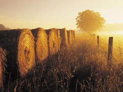 Misty Morning, Farmland and Wheat Straw Rolls, Near St. Adolphe, Manitoba, Canada