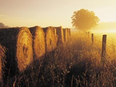 Misty Morning, Farmland and Wheat Straw Rolls, Near St. Adolphe, Manitoba, Canada by Dave Reede