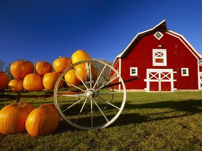 Pumpkins on Wagon near Barn