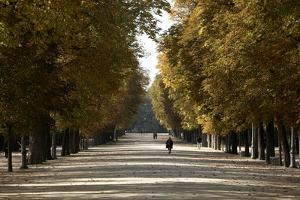 Parma Residents Stroll Through Tree-lined Promenades in Parco Ducale by Dave Yoder