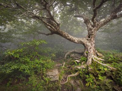 Creepy Fairytale Tree Spooky Forest Fog Appalachian Nc Fantasy Landscape