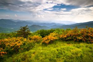 Flame Azalea Blooms Blue Ridge Mountains Roan Highlands State Park by daveallenphoto