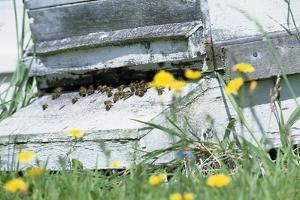 Bee Hive by David Aubrey