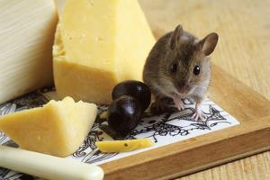 Mouse with Cheese by David Aubrey