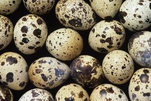 Quail Eggs by David Aubrey