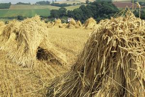 Wheat Sheaves by David Aubrey