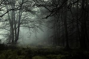 Fog in the Forest by David Baker