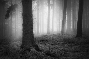 Silent Journey by David Baker