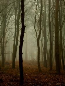 Tall Woods by David Baker