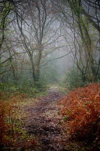 Woodland Scenery in England by David Baker