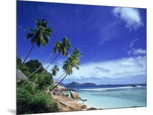 Palm Trees and Ocean, La Digue, Seychelles by David Ball
