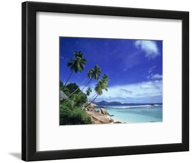 Palm Trees and Ocean, La Digue, Seychelles