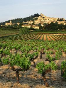 View of Provence Vineyard, Luberon, Bonnieux, Vaucluse, France by David Barnes