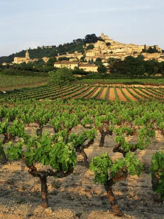 View of Provence Vineyard, Luberon, Bonnieux, Vaucluse, France