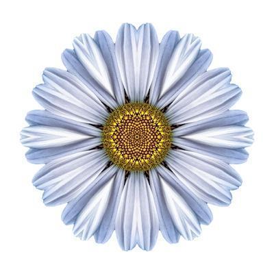 Kaleidoscope White Daisy