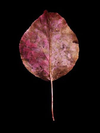 Rustic Leaf 2