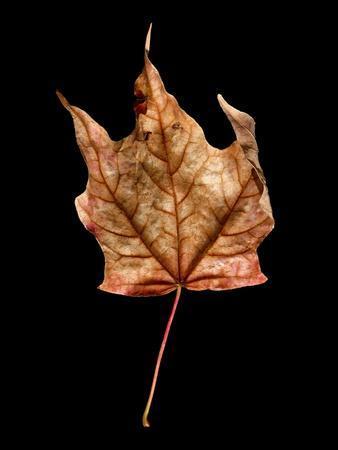 Rustic Leaf 3