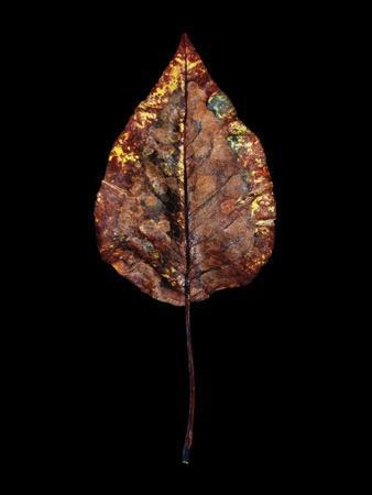 Rustic Leaf 4