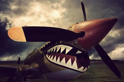 Curtiss Kittyhawk by David Bracher