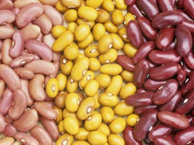 Bean Varieties: Left- Red Kidney, Center- Marfax, Right- Canada Red