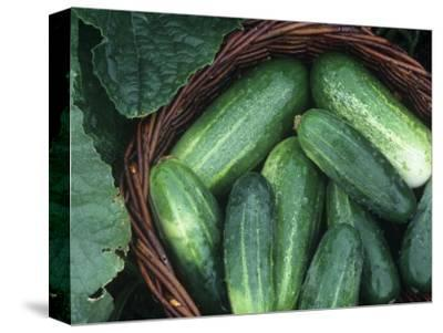 Cucumber Harvest in a Basket, Fancipak Variety (Cucumis Sativus)