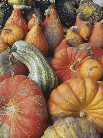 Harvest of Winter Squash