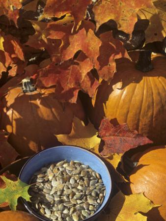 Pumpkins and Pumpkin Seeds, with Fall Leaves