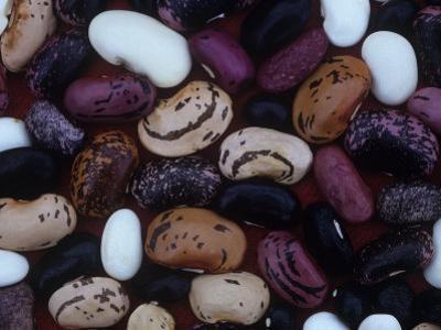 Scarlet Runner Bean Varieties, Phaseolus Coccineus